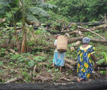 Mujeres de Kogo de la Asociación W.M de labor en la finca. 2015